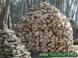heuer einige Bäume geschlägert