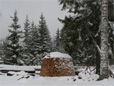 Schneebedeckte Holzmiete - 10 Festmeter Brennholz für den Winter in Schweden