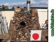 Cryptomeria japonica - japanische Zeder brennt auch in Japan