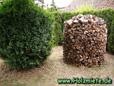 Weide, Buche, Birke, Kirchbaumholz und ganz frisch Eiche