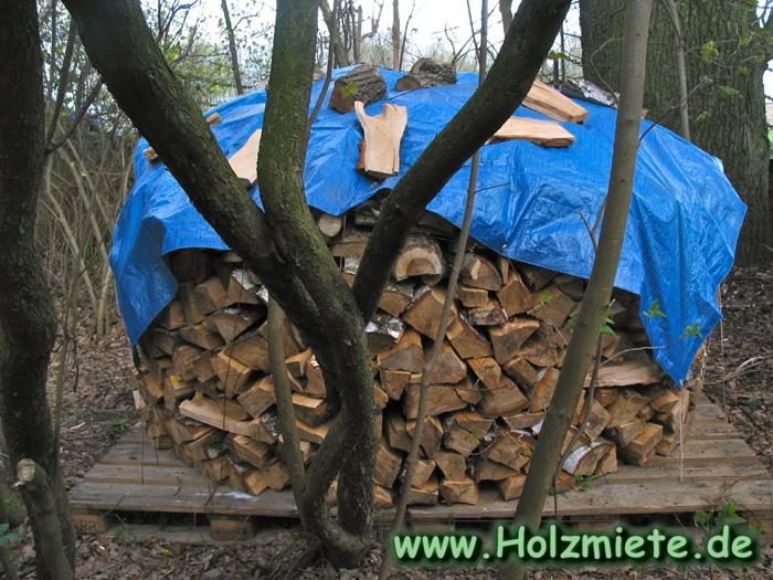 kranke Birke für Holzmiete