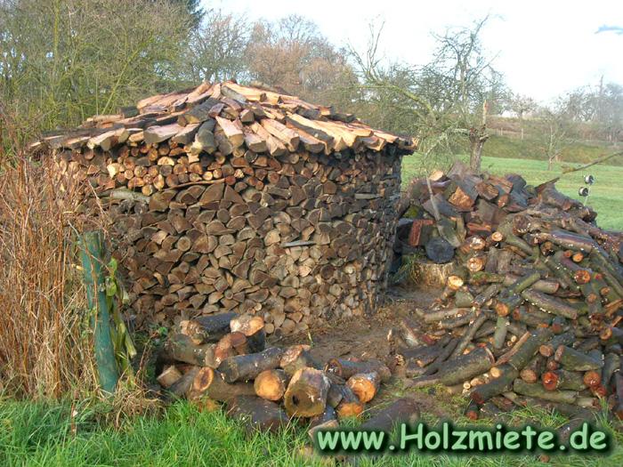 Brennholz Ernte aus der öffentliche Schlagraumversteigung
