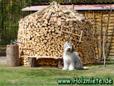 wie & wo wir unser Holz lagern